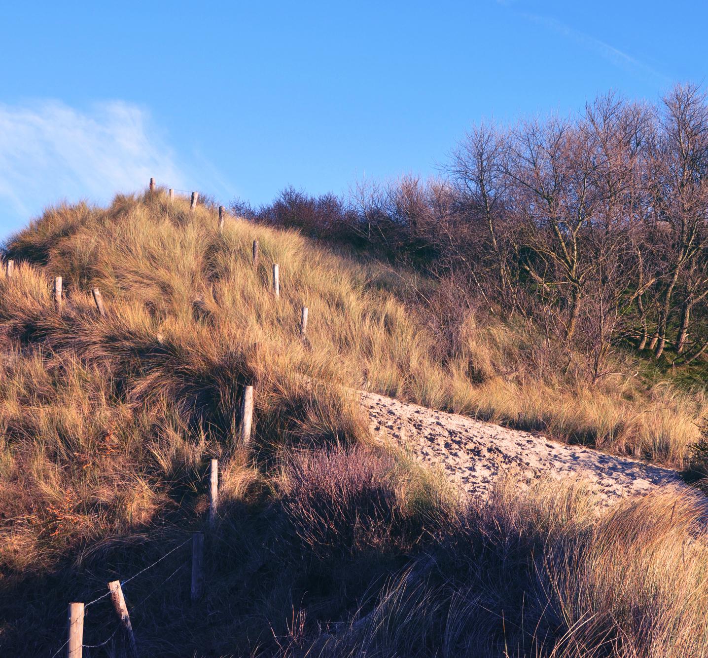Owl Image middelkerke-natuur-duinen